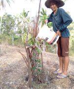 Trees4Bali-542442