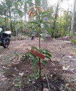 Trees4Bali-6766